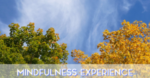 Mindfulness Experience